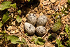 Kildeer Nest, Lawrence County, Ohio