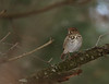 Hermit Thrush, Lake Campbell <br /> Harrisonburg, VA