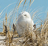 20140316_Jones_Nickerson Beach_56