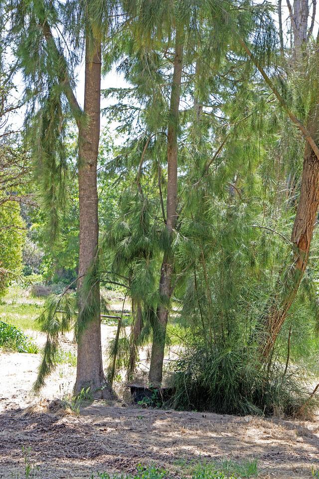 621 Niles Community Park