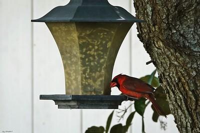 014_cardinal_20210517