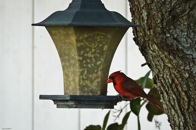 019_cardinal_20210517