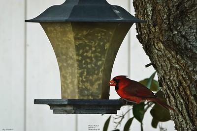 013_cardinal_20210517