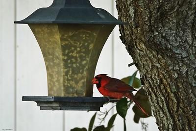 016_cardinal_20210517