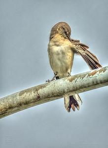 PA190024_mockingbird_painterly,nr50