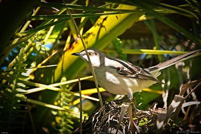 rx10_004_mockingbird_20210220