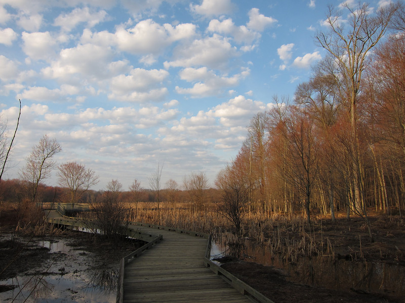 Huntley Meadows Park<br /> Boardwalk trail