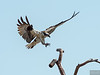 20140503_Oceanside MNSA_612