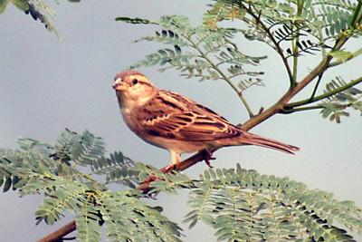 Okhla Bird Park 29102006