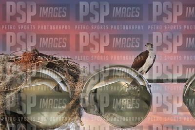 PSP_3189