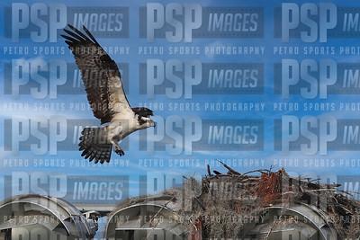 PSP_2910