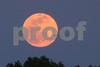 P1020080 Pink Moon w Osprey 2 5:3:15