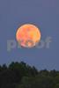 P1020093 Pink Moon 10 May 3 15