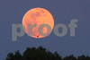 P1020084 Pink Moon w Osprey 7 May 3 2015