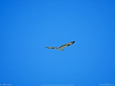 _2_osprey,_0223