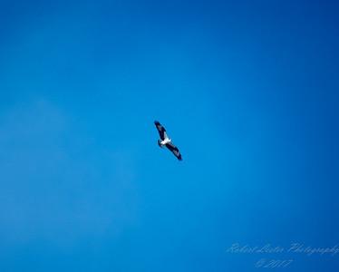 411 osprey 2017-12-22-1340788