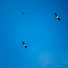 411 osprey 2017-12-22-1340789