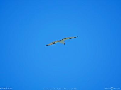 _1_osprey,_0223