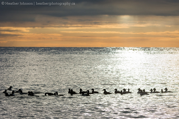 Flock at Sunrise