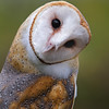 Barn Owl taken by Jerry Dalrymple