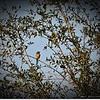 2015-03-02__3021339c20_Palm Warbler,Clearwater,Fl