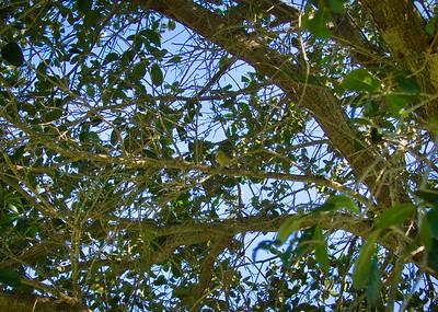 _B030076_Palm Warbler