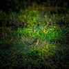 Palm Warbler_2017-11-17-178734