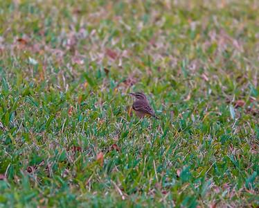 warbler  rx10m4  2012-01-30