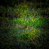 Palm Warbler_2017-11-17-178735