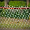 2015-01-26__1265277_Palm Warbler,Clearwater,Fl