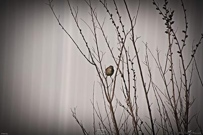 rx10_007_palm warbler_20210220