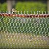 2015-01-26__1265278_Palm Warbler,Clearwater,Fl