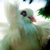 Pidgeon-9431