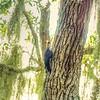 _A300059_  Hammock Park,Dunedin_  tonywarm,nr100