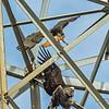 PC120326_eagle+hawk,