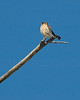 """Kestrel perched on """"The Branch"""""""