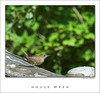 House Wren-DSC_7211-framed-02
