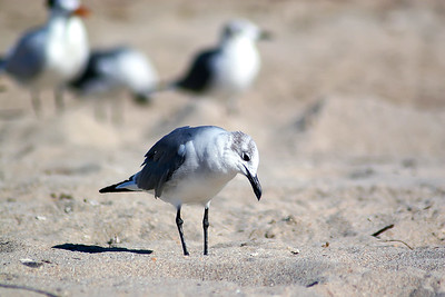 Seagulls(edit)_0003