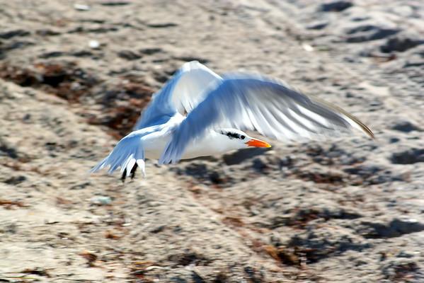 Seagulls(edit)_0053