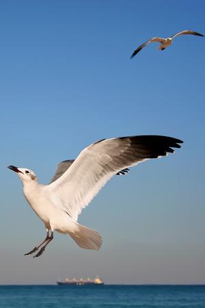 Seagulls(edit)_0056