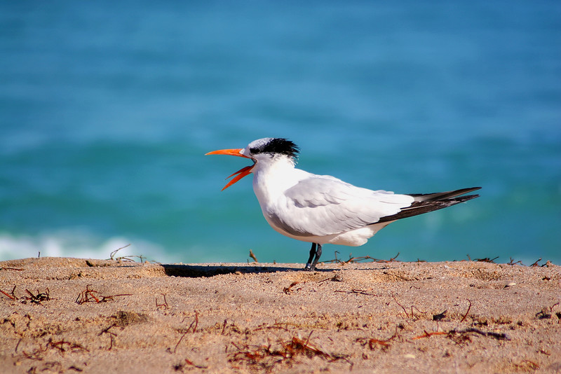 Seagulls(edit)_0013