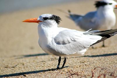 Seagulls(edit)_0044