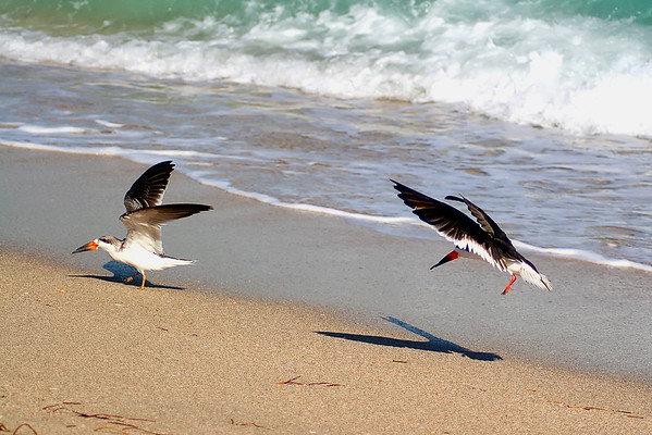 Seagulls(edit)_0032