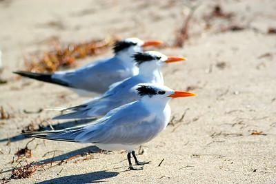 Seagulls(edit)_0050