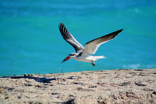 Seagulls(edit)_0015