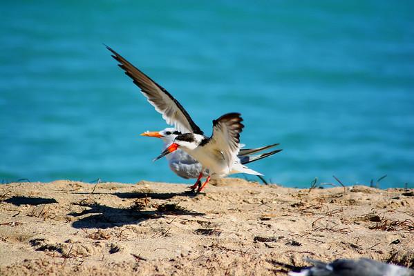 Seagulls(edit)_0009