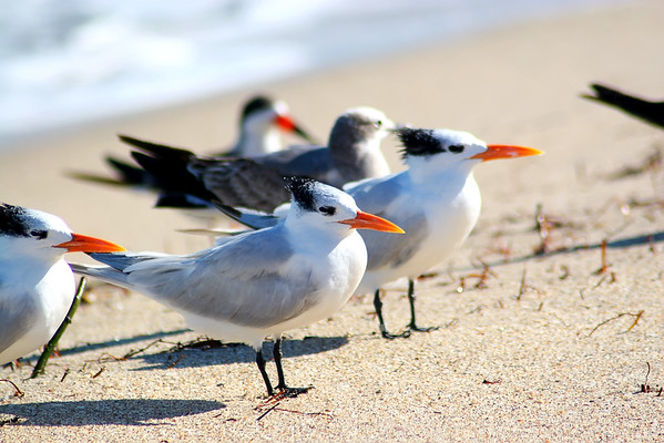 Seagulls(edit)_0039