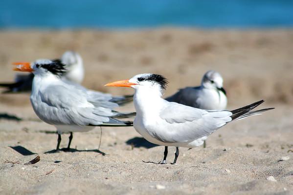 Seagulls(edit)_0001