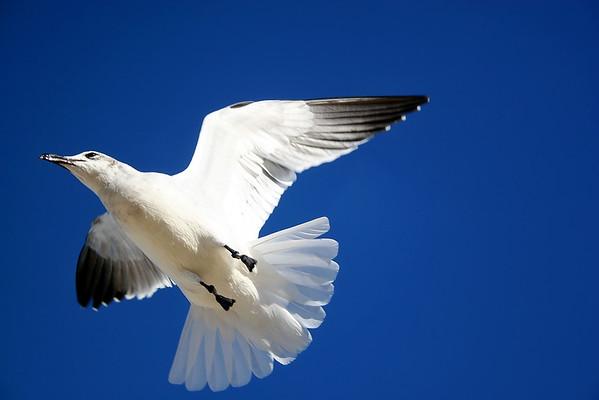 Seagulls(edit)_0066