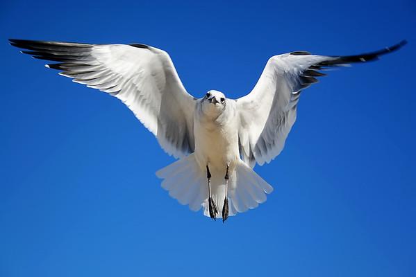 Seagulls(edit)_0063